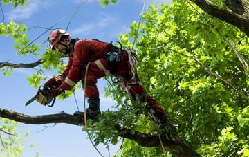 find trusted rated Surrey tree surgeons