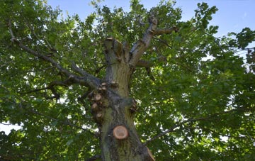 what is Surrey tree surgery?